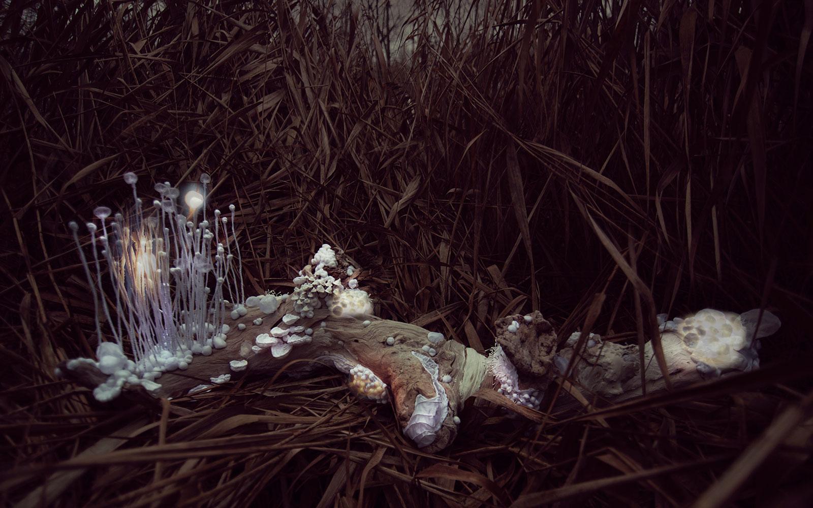 Borovice — svítící objekt Evy Spacelights. Nečasové